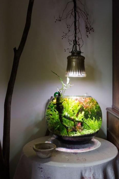 roshiさんが今はまっているアクアリウム。植物育成用のLEDをアンティークの照明器具にはめて照射。丸い球体の中にひとつの生態系を創り上げる。まわりのインテリアとの調和を考えて、横にダムで拾って来た流木を置いた。