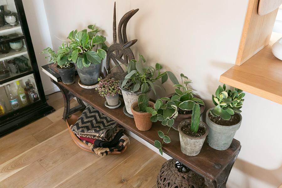 和田宅では植物との暮らしも楽しんでいる。アンティークのベンチの上に、お気に入りのグリーンをまとめて飾る。