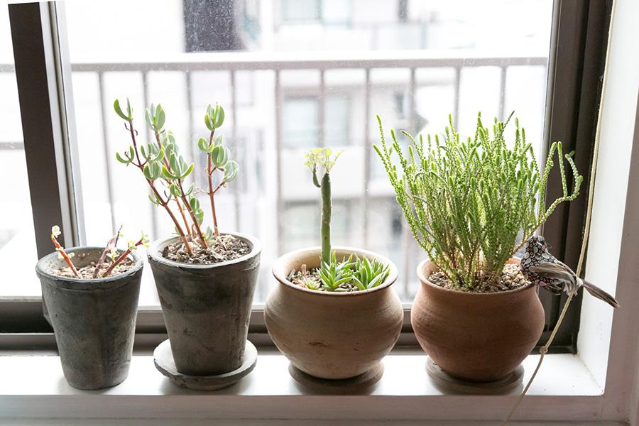 キッチンの窓には小さな鉢を並べて、グリーンの姿形のおもしろさを楽しむ。