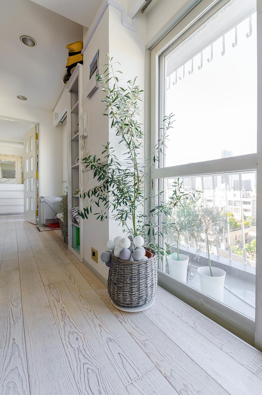 ベランダでも観葉植物を育てている。オリーブのナチュラル感が、ヴィンテージ加工の無垢の床に合う。