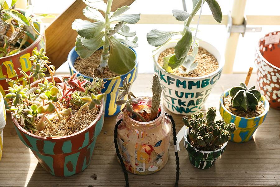 ペイントした鉢に植えた多肉植物やサボテンを、数鉢まとめて置く。