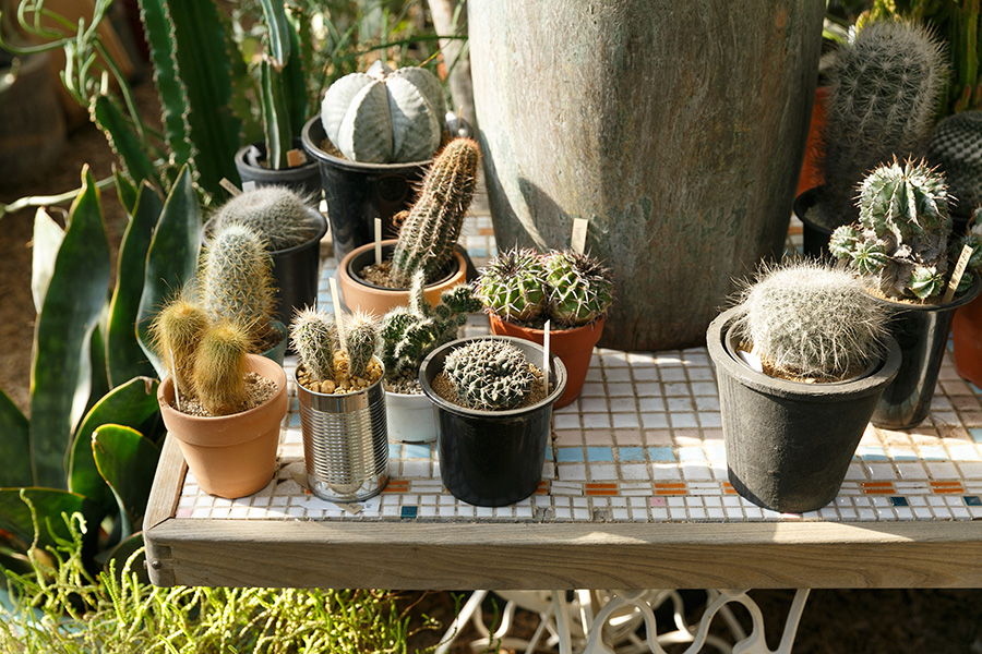 「植物を飾るための、専用の台を作るとかわいいと思います」と齊藤さん。