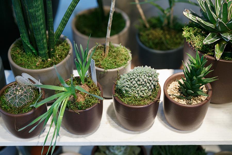 鉢に統一感をもたせながら、様々な形の植物を楽しむコーナーを作る。