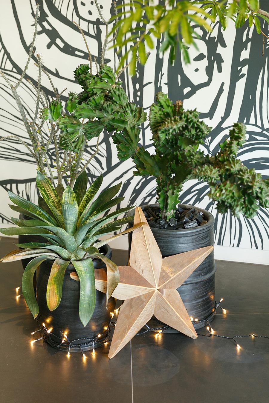 高さの違う鉢を組み合わせ、植物のボリュームや形のバランスを見ながら配置する。
