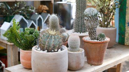 マンションでグリーンを楽しむ   植物のコーディネイトが センスアップする3つのアイディア