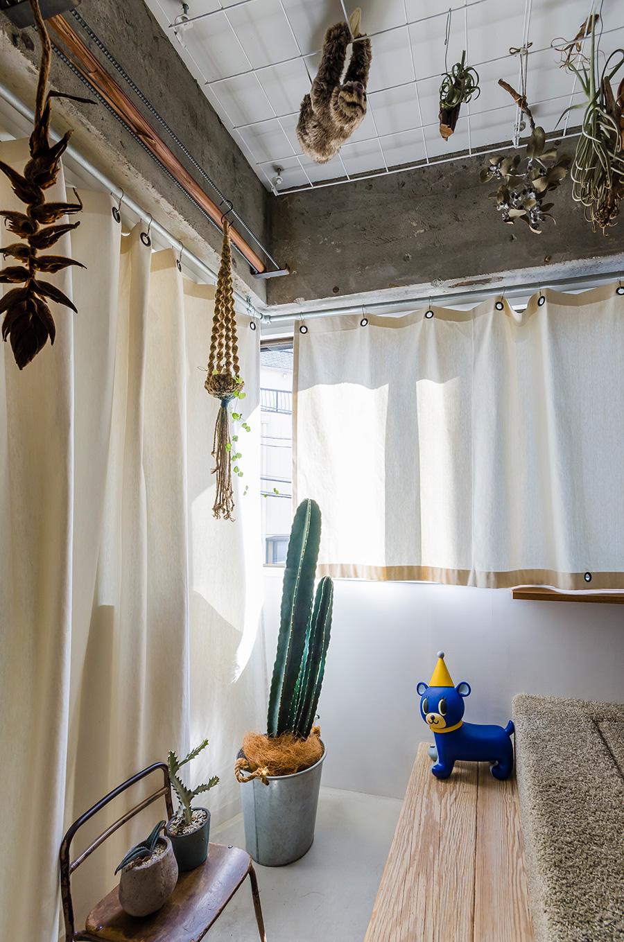 天井にドライフラワーやエアプランツを吊るすための網棚を設置した。