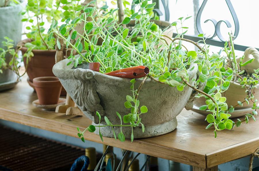 鉢のセレクトとグリーンの合わせ方にもセンスが光る。