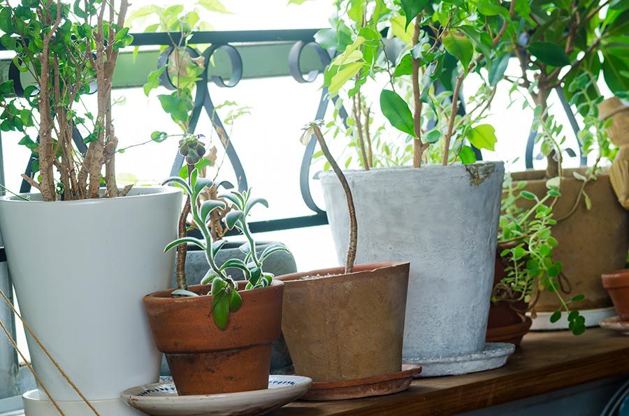 棚の上では多肉植物やハーブ類を育てる。