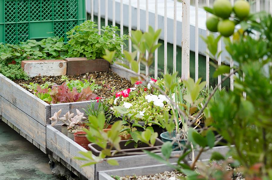 家庭菜園、花、多肉植物など、バラエティに富んだガーデニングを楽しむ。