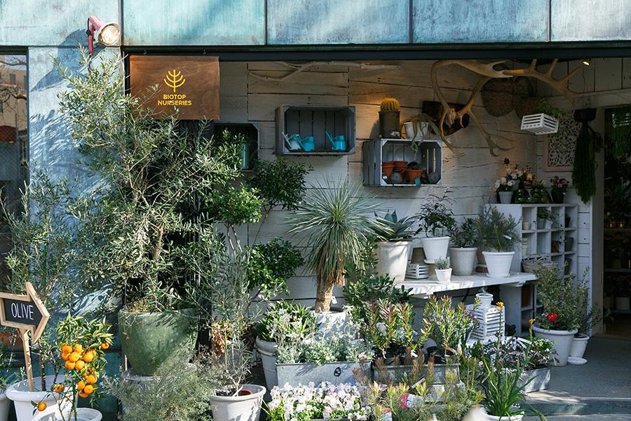 白金台の「ビオトープ・ナーセリーズ」には、オーストラリア系や柑橘系など、今回提案していただいた植物も数多く揃う。