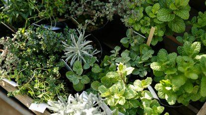 マンションでグリーンを楽しむ   マンションのテラスが 好きになってくれる植物たち