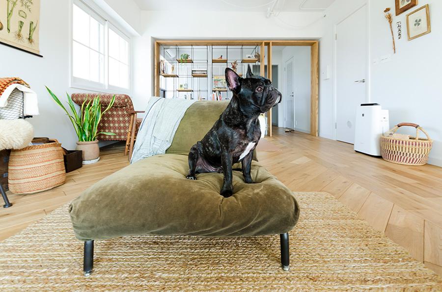 「JOURNAL STANDARD」のソファチェアは愛犬の指定席に。