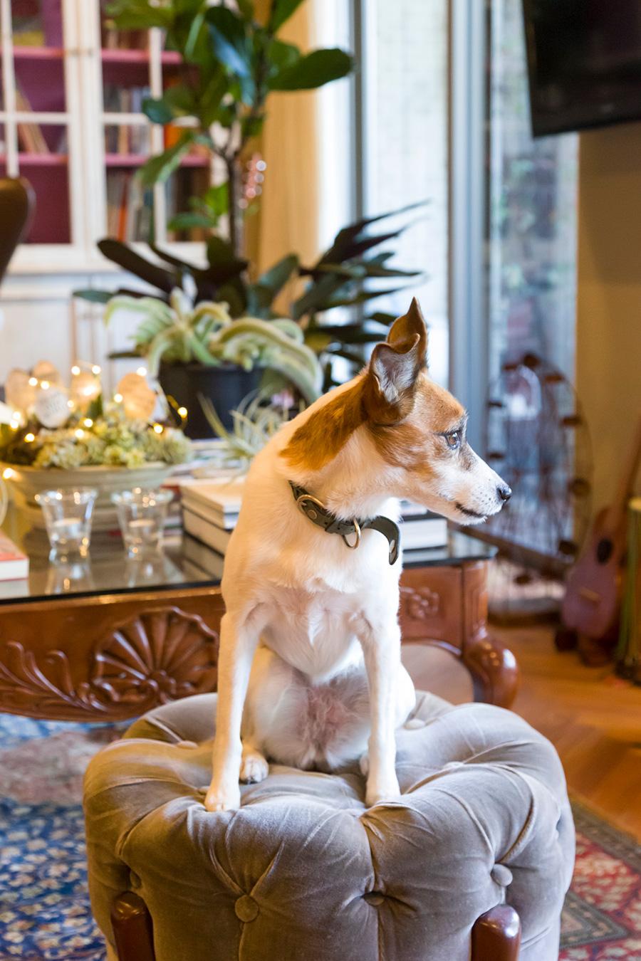 片柳家の2匹の犬たちは、広いテラスとリビングを自由に行き来するのが大好き。