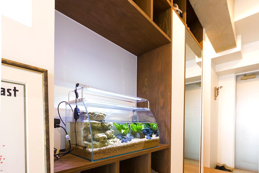 飼育セットがあるのも学校らしい。この水槽は長寿のイモリ夫婦の部屋。