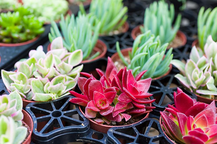 紅葉するものや葉先に違う色の出るもの。様々な品種を合わせてコーディネートを楽しみたい。