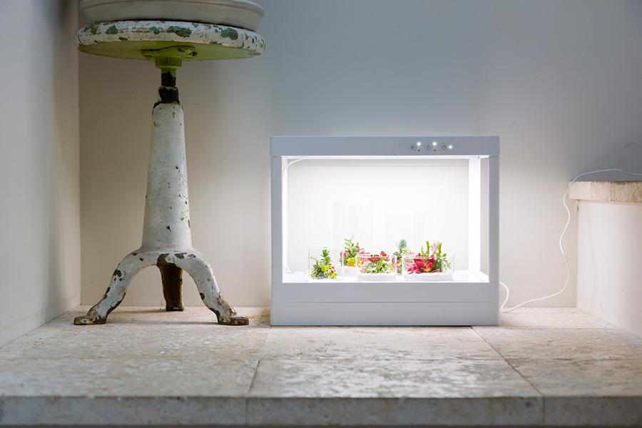 「TOKIIRO」がデアゴスティーニとコラボして開発したLEDプランター「greenteria」。安定したLEDの光で、室内でも多肉植物を育てることができる。実際、元気に育てるにはこのくらいの明るさが必要なのだ。