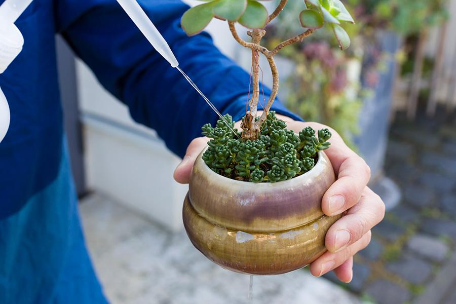 水やりは根っこに向けてじゃぶじゃぶと。鉢の下から水がこぼれるくらいでOK。