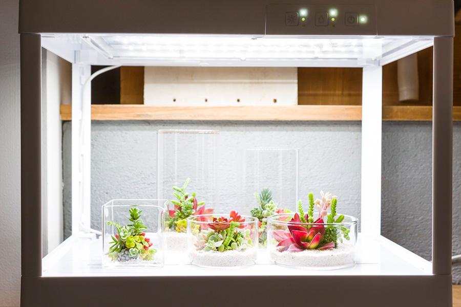 室内で多肉植物を楽しめるLEDプランター「greenteria」。近藤さんがデアゴスティーニと共同開発。