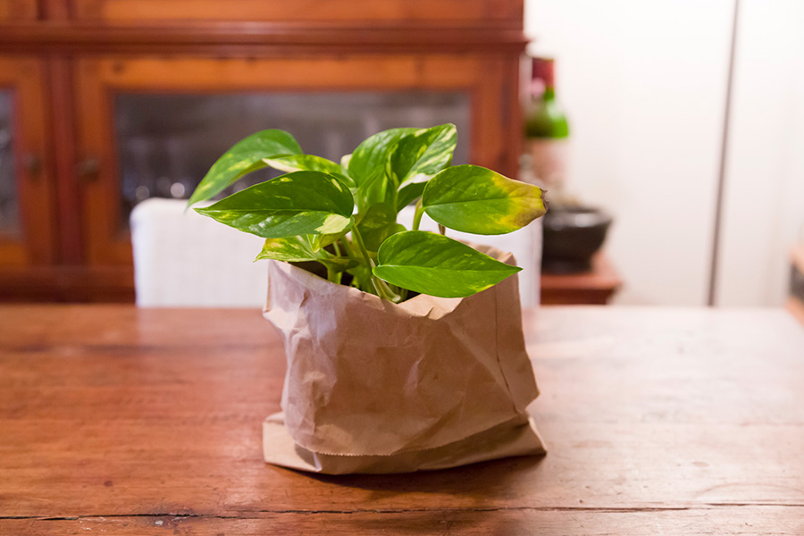 パン屋さんの紙袋や、100円ショップで買ったクラフト紙を観葉植物の鉢カバーにアレンジ。素朴さがおしゃれ。