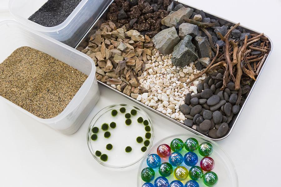 1本植えを経て、寄せ植え的なレイアウトを楽しむ時に使いたい素材。マリモや小石、砂の代わりのビー玉なども。