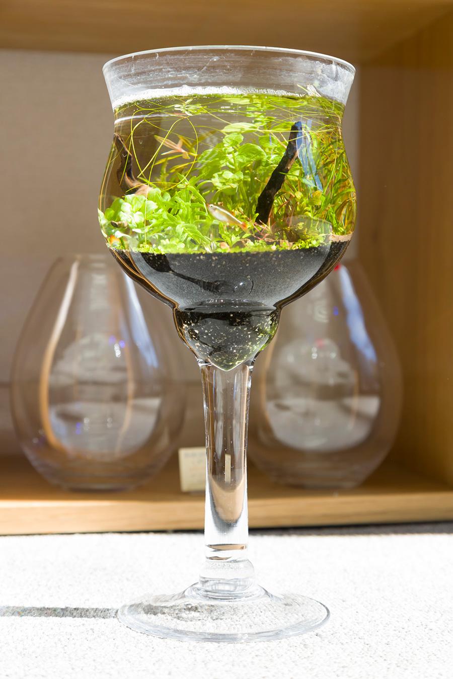 巨大なワイングラスのような器に小さなアカヒレが泳ぐ。¥5800〜。