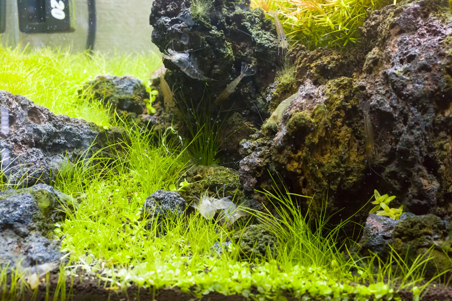 目に優しいグリーンと、穏やかな水の流れが癒しを与える。