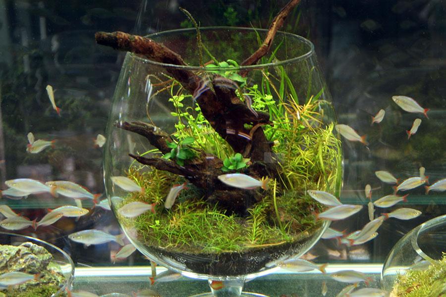 水槽の大きさにあった数の魚を飼うことも。@SENSUOUS
