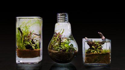 グリーンと水の潤いを  手軽に始める 癒しのアクアリウム