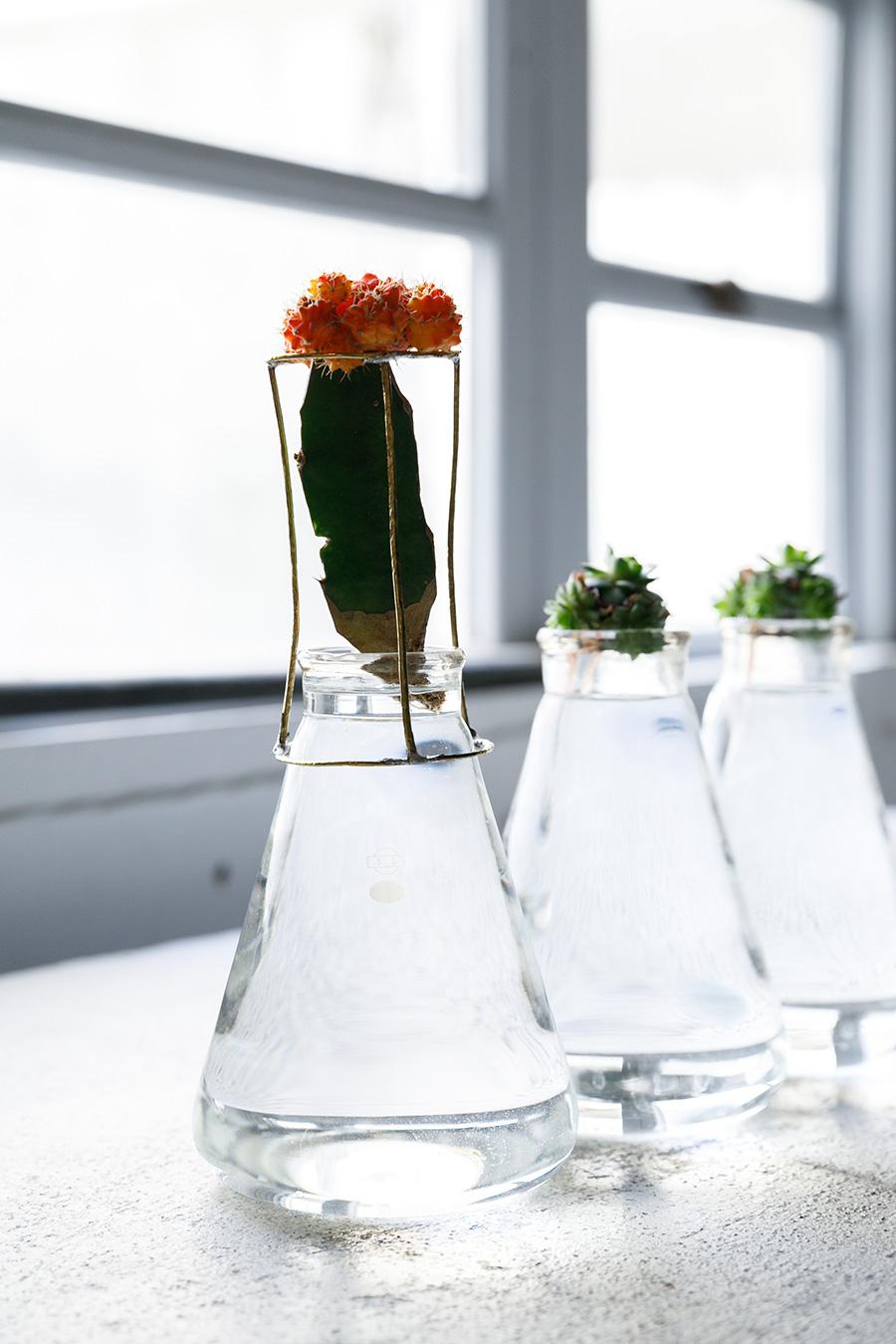 スタンドを使いサボテンを立たせる。酸素を含んだたっぷりの水で育てると、水耕栽培が成功しやすい。