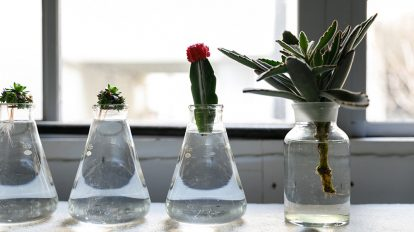 新しい植物の楽しみ方  多肉植物とサボテンの 水耕栽培にチャレンジ