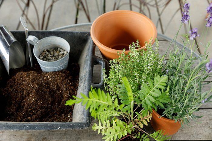 [用意するもの]ハーブ/ラベンダー、タンジー、タイム。鉢。培養土。鉢底石。ココヤシファイバー(もしくは鉢底ネット)。土入れ。ハサミ。棒。