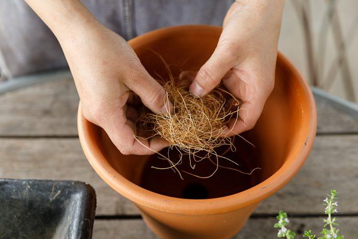 鉢の底の穴から土がこぼれてしまわないようにココヤシファイバーを穴に被せる。「『SOLSO FARM』ではココヤシファイバーを使うことが多いですが、鉢底ネットでもかまいません」