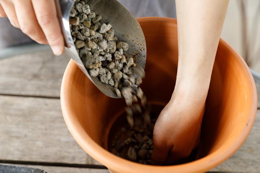 鉢の底に水がたまると根腐れの原因になる。水はけをよくするための鉢底石を鉢底が隠れるくらいまで入れる。