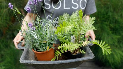 植物の力を生かすガーデニング  虫除け効果のある植物を ベランダで育てる