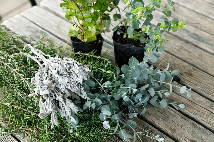 [ハーブの材料]奥のポット苗の右はオレガノ、左はミント。下は右がユーカリ、左がローズマリー。色味として添えた白い葉の植物はシロタエギク。