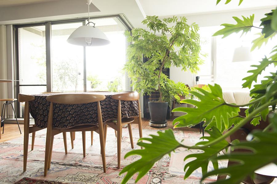 ハンス・J・ウェグナーのハートテーブル、ハートチェアがダイニングの主役。エバーグリーンなどの観葉植物が南国リゾートの雰囲気を出す。