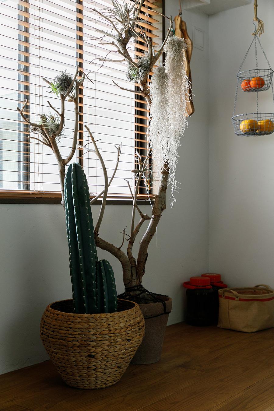 グリーン選びのポイントは見た目のユニークさ。「エアプランツを置いた右の木は行きつけの植物屋さんのディスプレイだったもの。頼みこんで売ってもらいました」(稲田さん)。