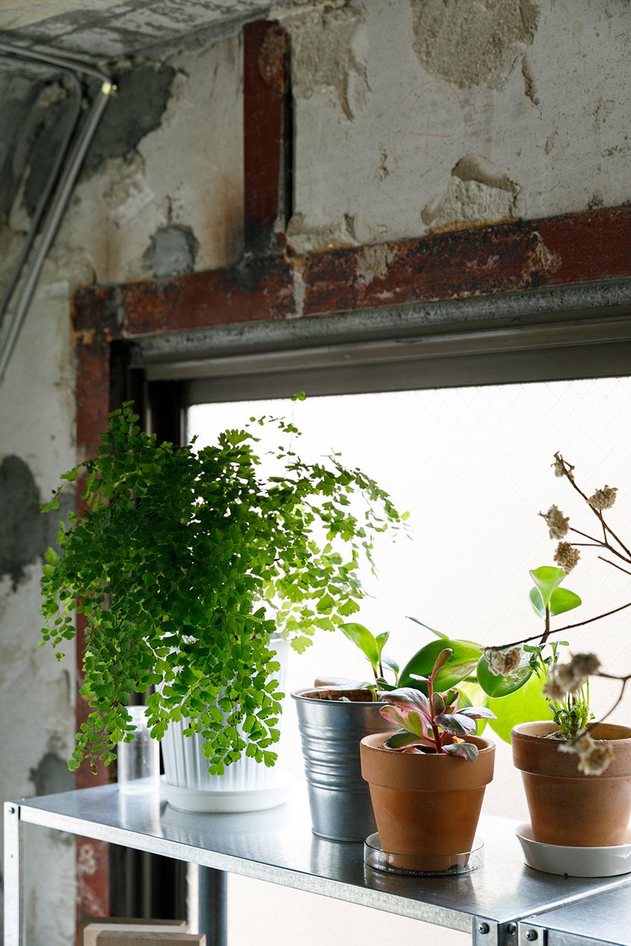 コンクリート板や鉄骨が剥き出しの壁がインダストリアルな雰囲気をつくる。