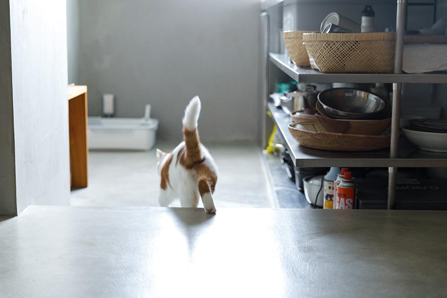 「設計当時は猫と暮らすことを考えていなかったので扉のないオープンなキッチンにしましたが、毛が飛ぶので扉はあったほうががよかったですね」