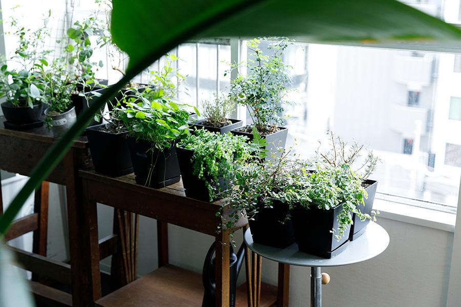 南側のサンルームは潰してリビングの一部に。日当たりが良いため、植物の定位置になっている。