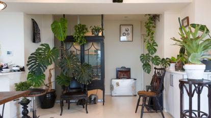 高台マンションの最上階  風の通り抜ける空間で 植物とアンティークを愛でる