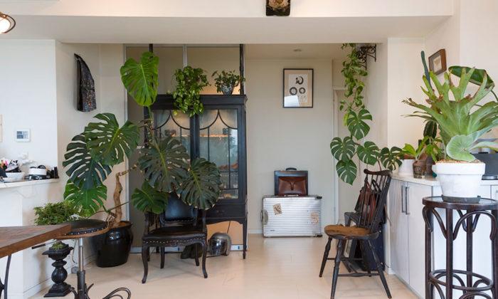 高台マンションの最上階風の通り抜ける空間で植物とアンティークを愛でる