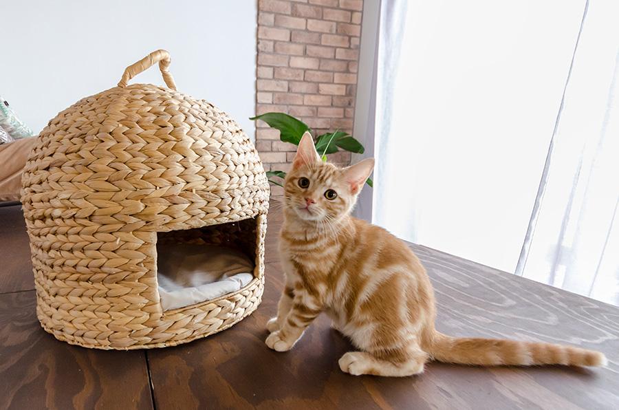 愛猫のムギ。冬場は猫ちぐらで丸くなることも。