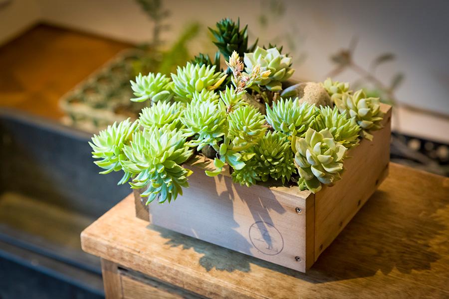 『YARD』の梅津さんが2年前に作った寄せ植え。「外に出しっぱなしの放置状態ですが、どんどん成長し、花も咲いてくれます」