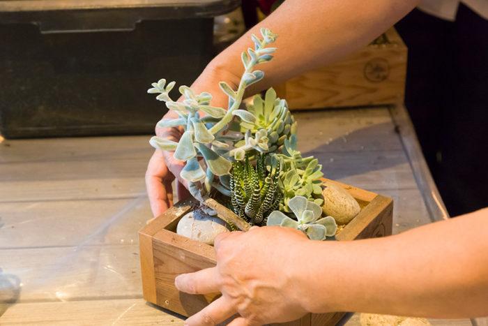 大きめの苗の下に石を入れてグッと持ち上げる。カッコよくバランスよく仕立てるためのコツだ。