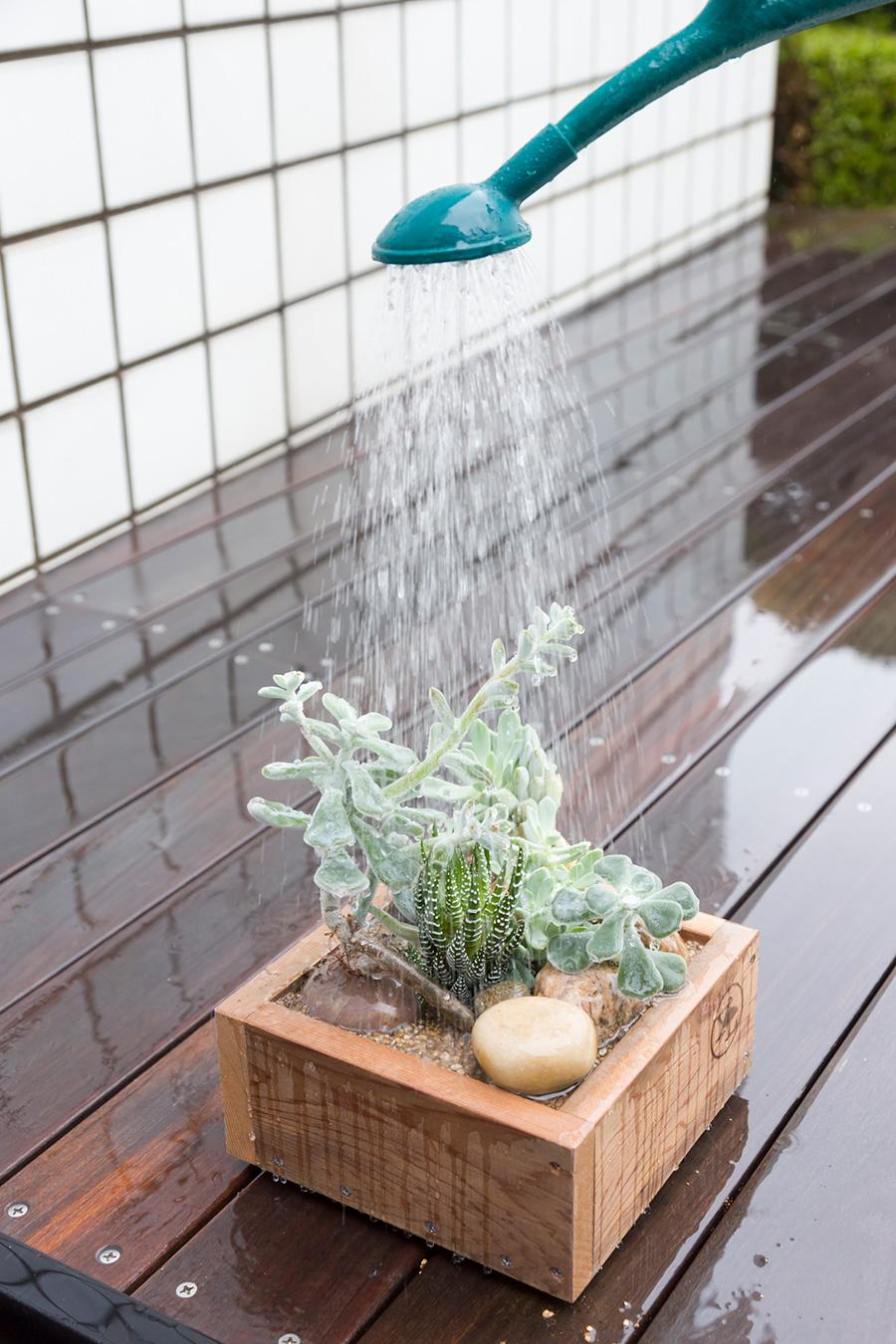 植え替えが終わったら、しっかりと水やりをする。葉の上からジョウロを使って優しく水をかければ、病害虫の予防にもなる。
