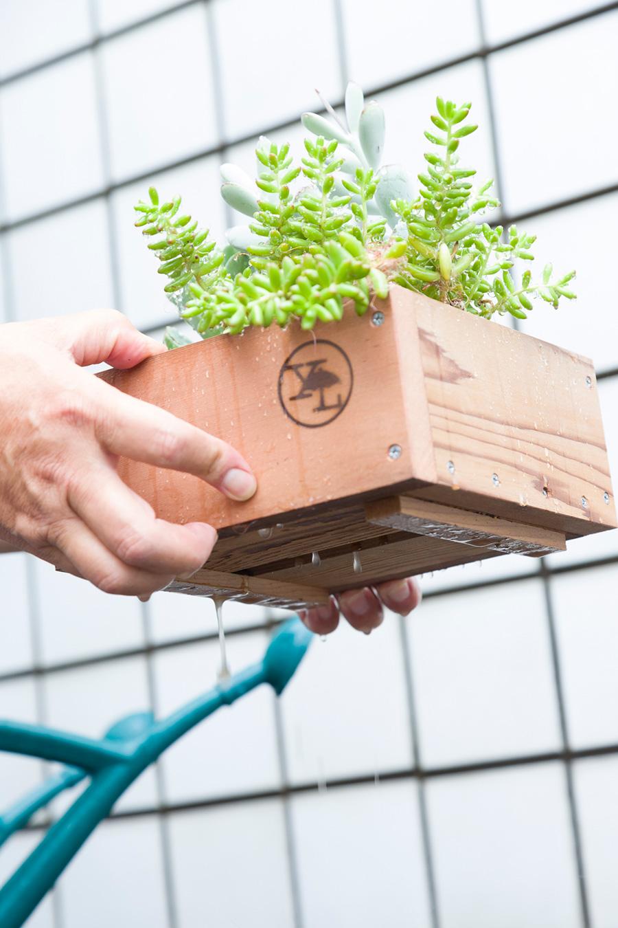 普段の水やりも、用土が乾いてから、鉢底から水が出るまでたっぷりと水をやるのが上手に植物を育てるコツ。