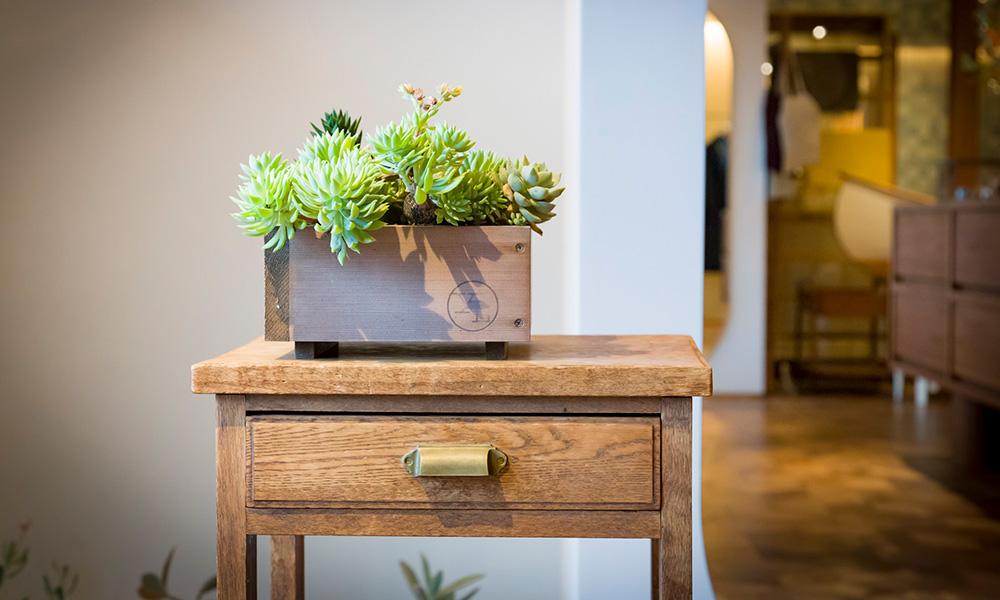 木箱に多肉植物を寄せ植えする  石を配して、自然を 切り取ったような景観を作る