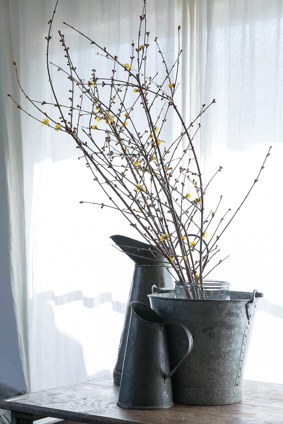 蝋梅をガラスの花瓶に生け、花瓶をバケツに入れて安定させる。バケツと同じ素材の水差しを飾って全体のバランスを整える。