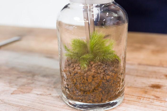 ピンセットで苔を挟んだまま、土に挿す。